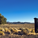 Outhouse and tree in Berlin Ichthyosaur state park Nevada great Basin